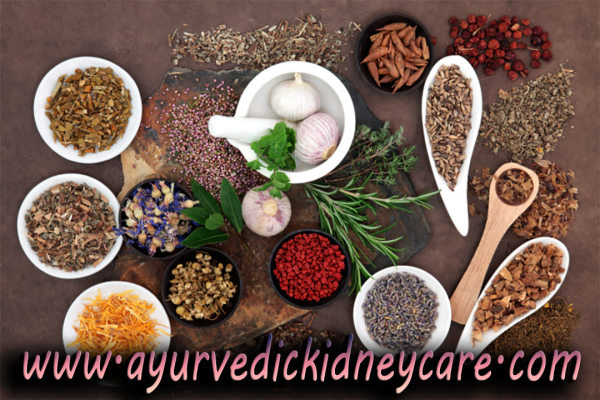 Kidney Failure Treatment in Ayurveda by Ayurvedic Medicines